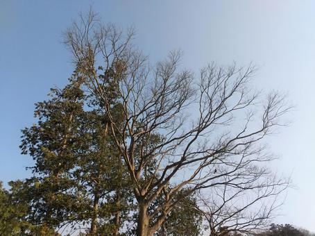 침엽수와 활엽수 고목 풍경 이미지