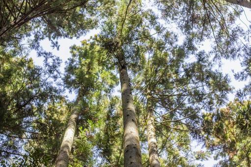 숲의 나뭇잎 사이로 비치는 햇빛 3