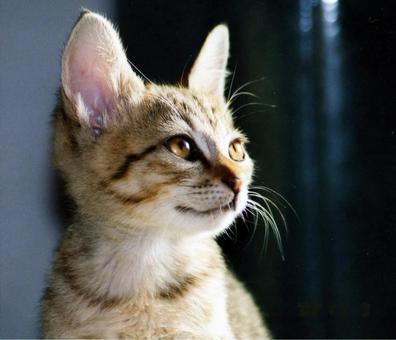Kitten's profile