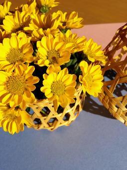 Yellow chrysanthemum ②