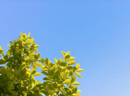 Fresh green and blue sky