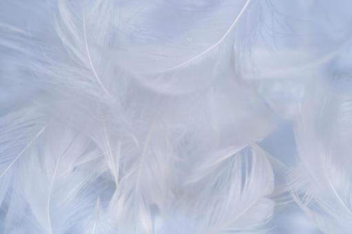 White feather, background material