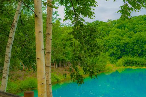 숲 너머로 보이는 푸른 연못 (홋카이도 비 에이 쵸)