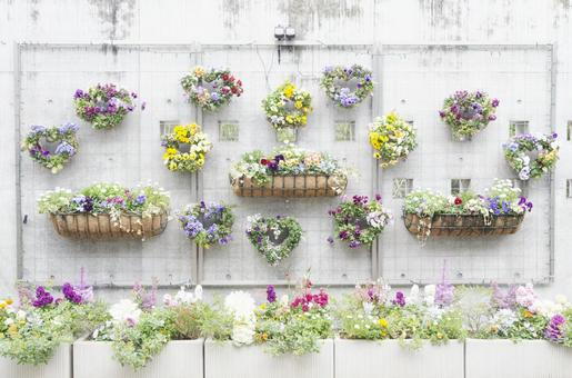 Potted planting 4