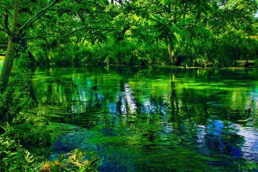 Beautiful lush river