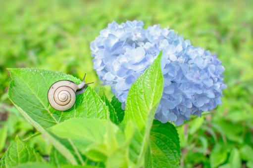 六月與蝸牛和繡球花的形象! !!