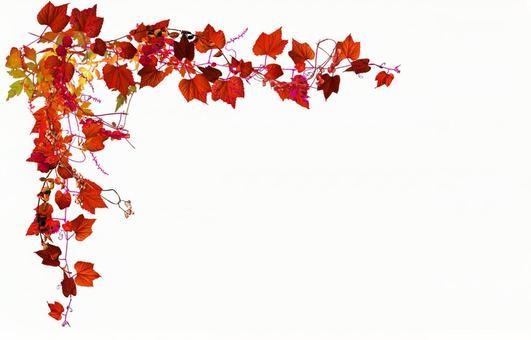 Autumn leaves in autumn