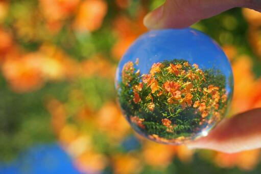유리 공 안에 푸른 하늘과 능소화
