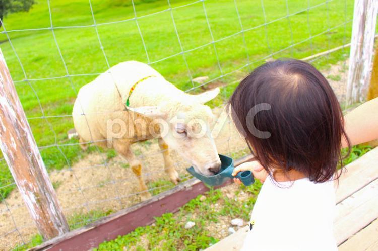 動物に餌をあげる子供の写真