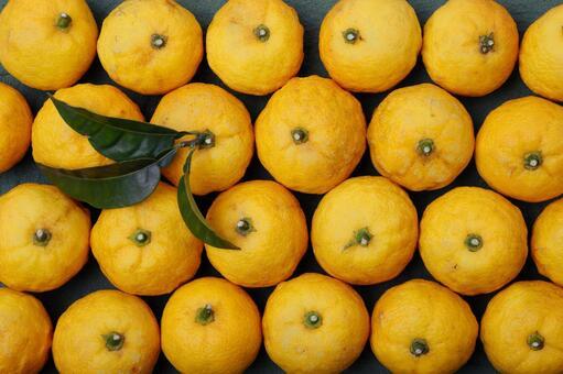 유자 노란 유자 열매