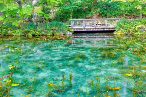기후현 미노 지역의 관광 명소 모네의 연못