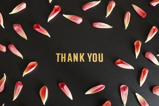 [Message] Thank you & red petals