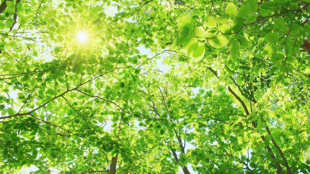 Landscape where leaves overlap with sunbeams through sunlight