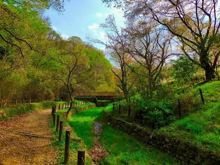 봄의 나가 누마 공원 신록의 풍경