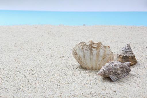 Seashell of the beach 12