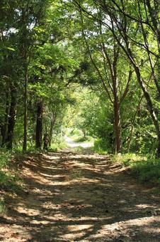 A forest road, a tree tunnel