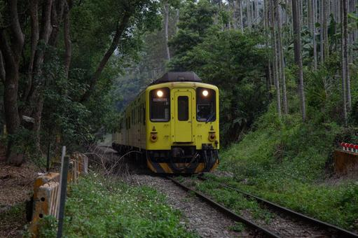 Taiwan Railways-Green Tunnel and Local Lines