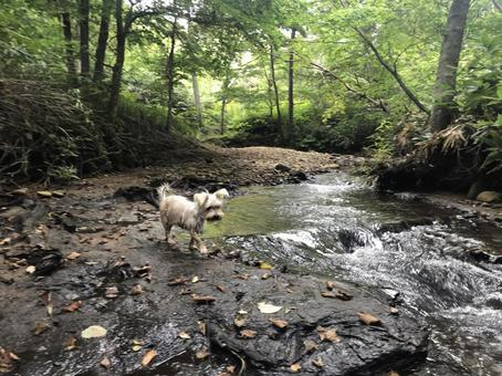 Dog and stream