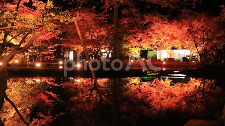 曽木公園 紅葉と夜の池に浮かぶ逆さ紅葉の写真