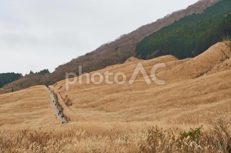 仙石原すすき草原の写真