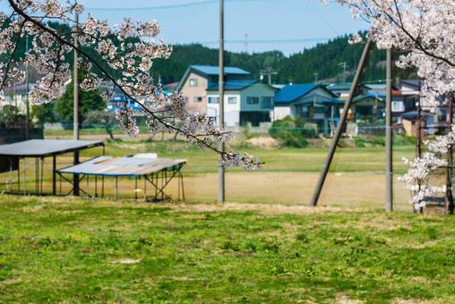 벚꽃과 야구장