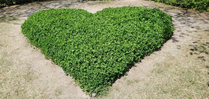 Heart-shaped clover