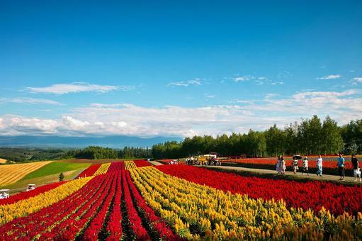 한여름의 꽃밭