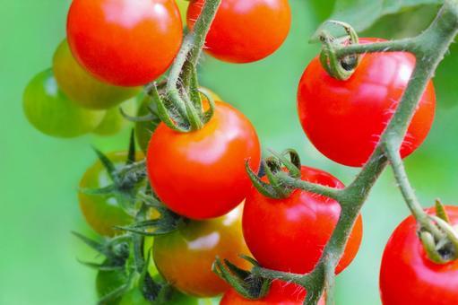 가지 달린 토마토