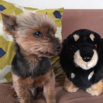 狗和狗毛绒玩具