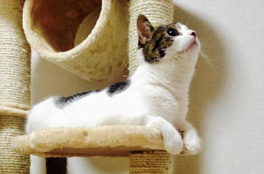 一隻貓放鬆,抬頭看著貓塔