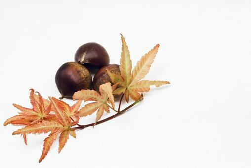 Chestnut and maple