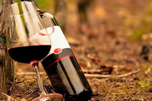 Vine and wine 2