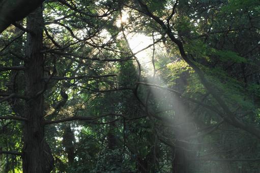 森林閃耀的光芒