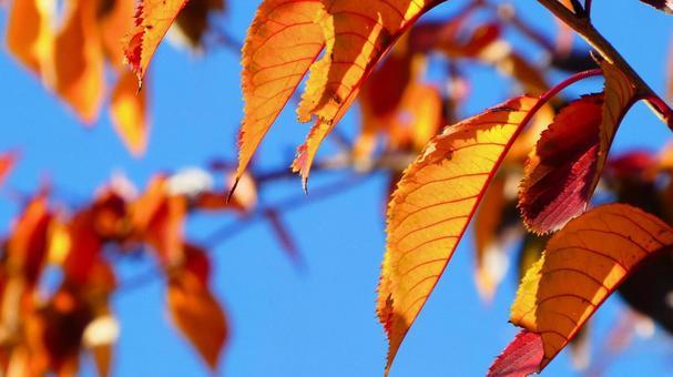 Dead leaves in the autumn sun