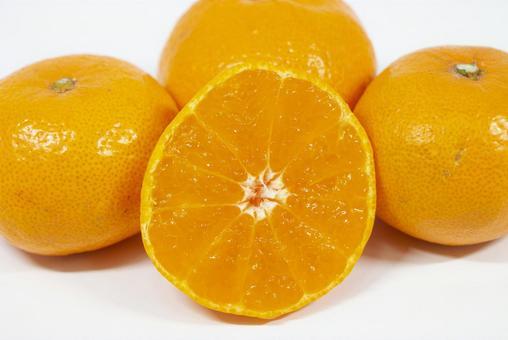金山飛行員橘子