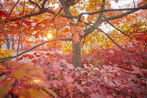 Autumn leaves trees 33