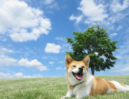 푸른 하늘과 언덕의 개