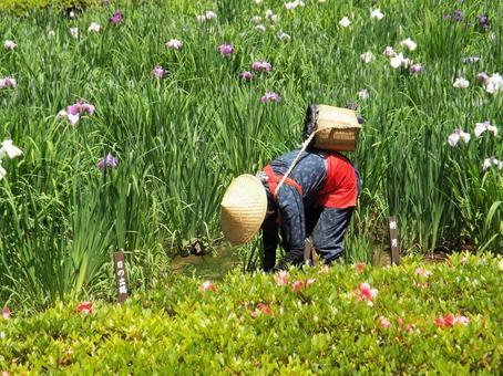 Flower picking girl