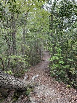 森の中のハイキングコース