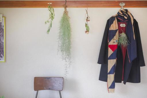 Coat, stall and air plant