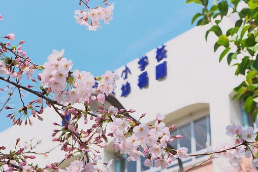 Cherry tree and school building