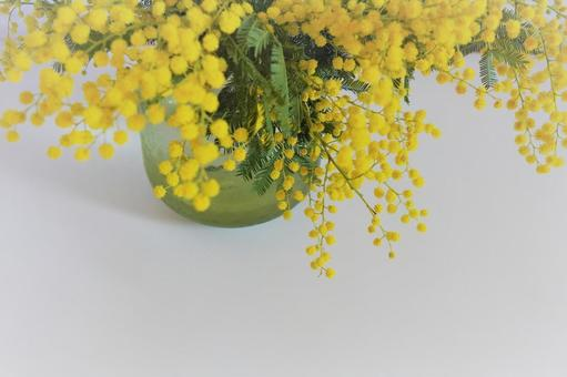 [Interior flower] Wood background and mimosa h