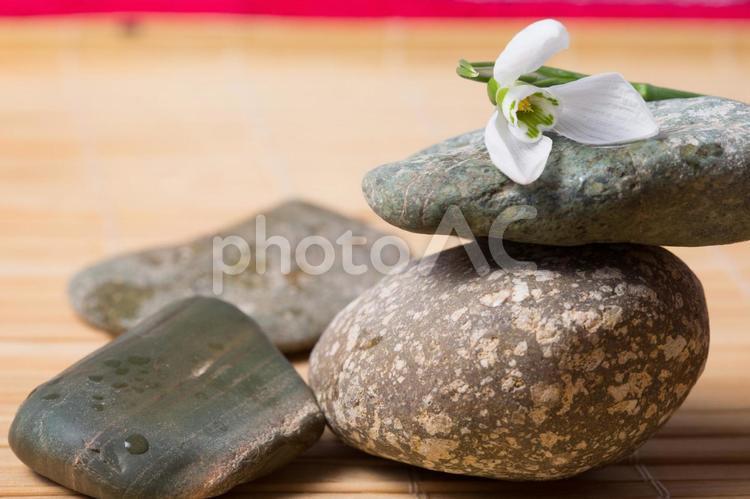 小石と花9の写真