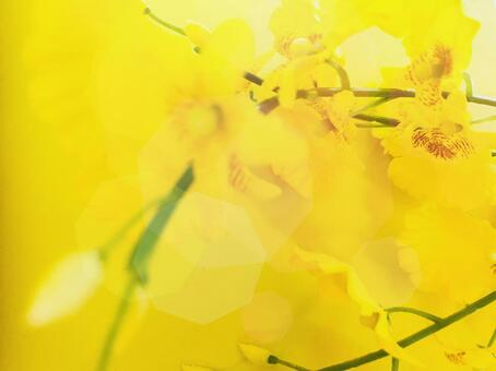 Yellow spring color image