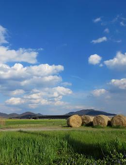 Meadow in the blue sky