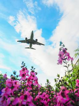 Blue sky, airplane and flowers