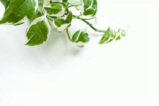 식물의 배경 소재 흰색 배경