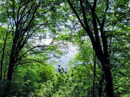 Mountain Forest 03