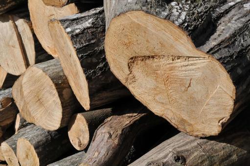 벌목 된 나무