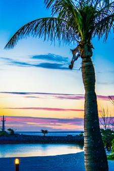 Dusk and palm tree
